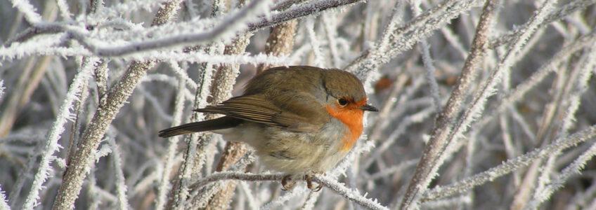 Hoeveel vogels zitten er bij jou in de tuin??