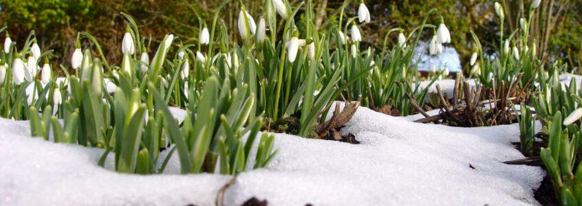Prachtig winter wonderland in mijn tuin…
