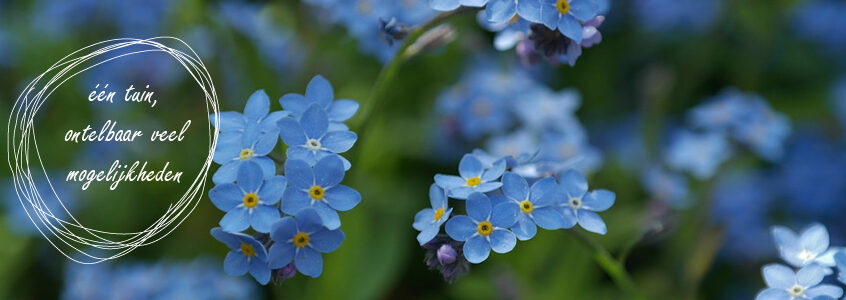Ik heb de lente in mijn bol…